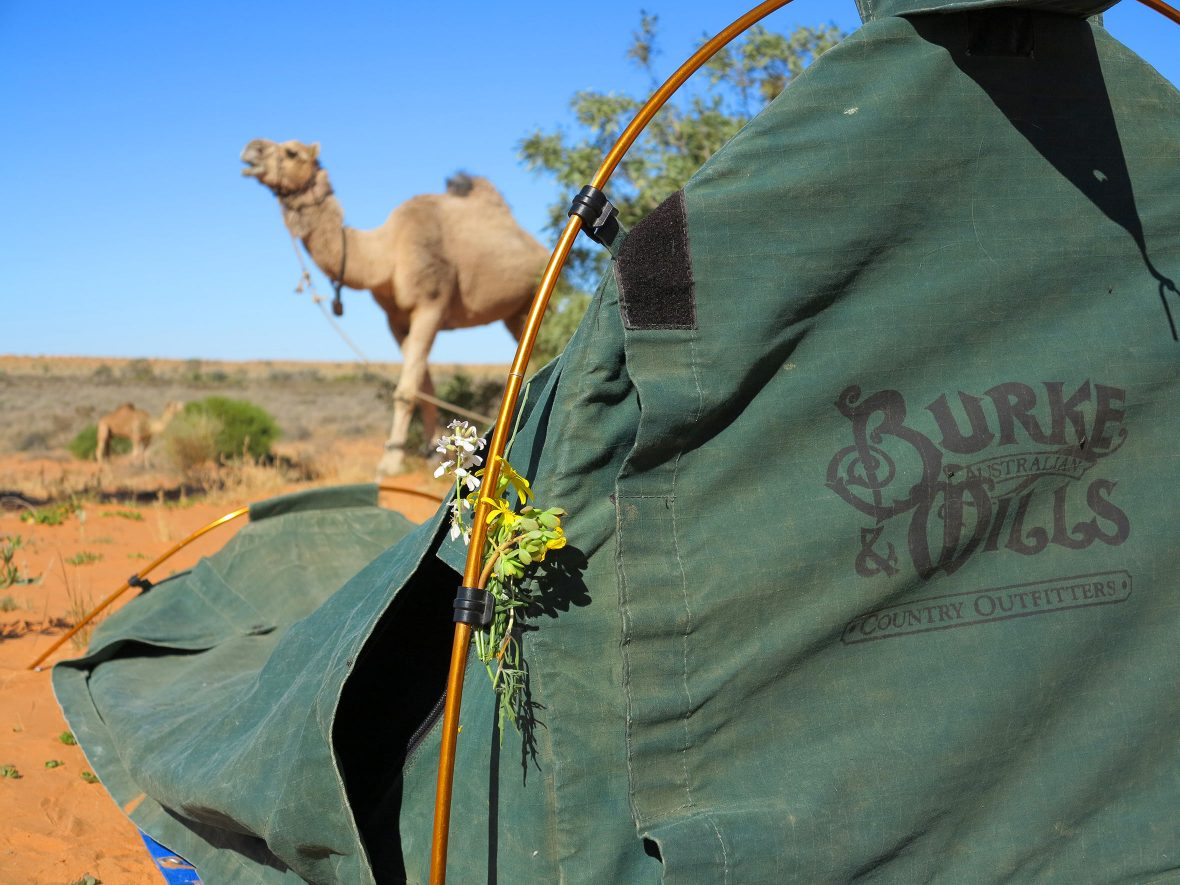 A swag set up in the Simpson Desert.
