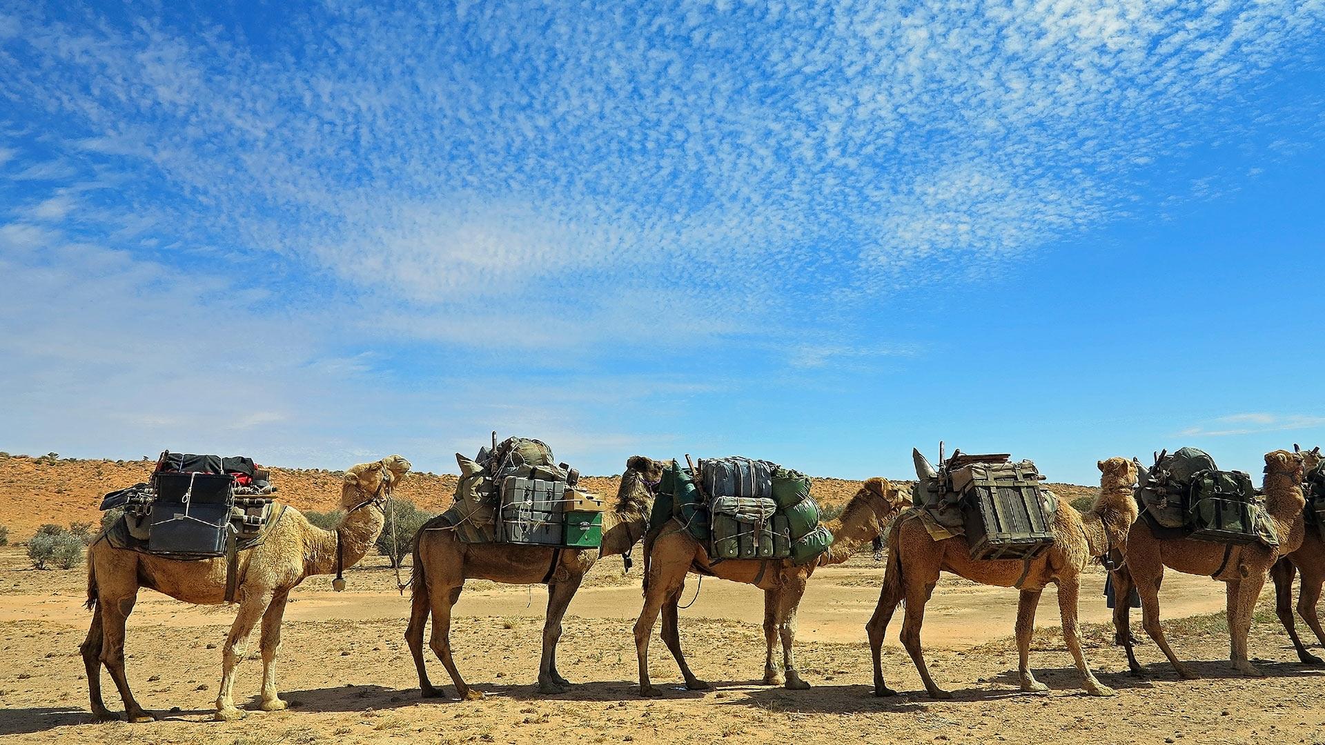 What I learned on a 300km walk through the Australian desert