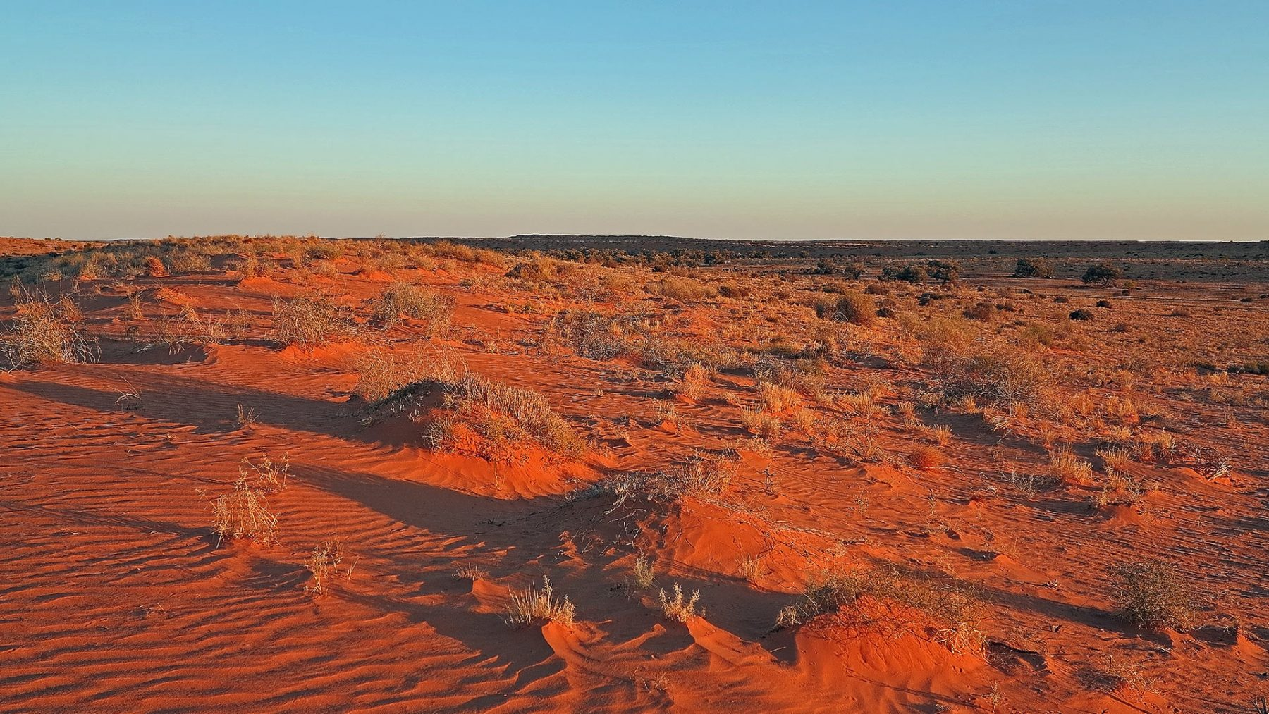 The red dunes of the Simpson Desert.