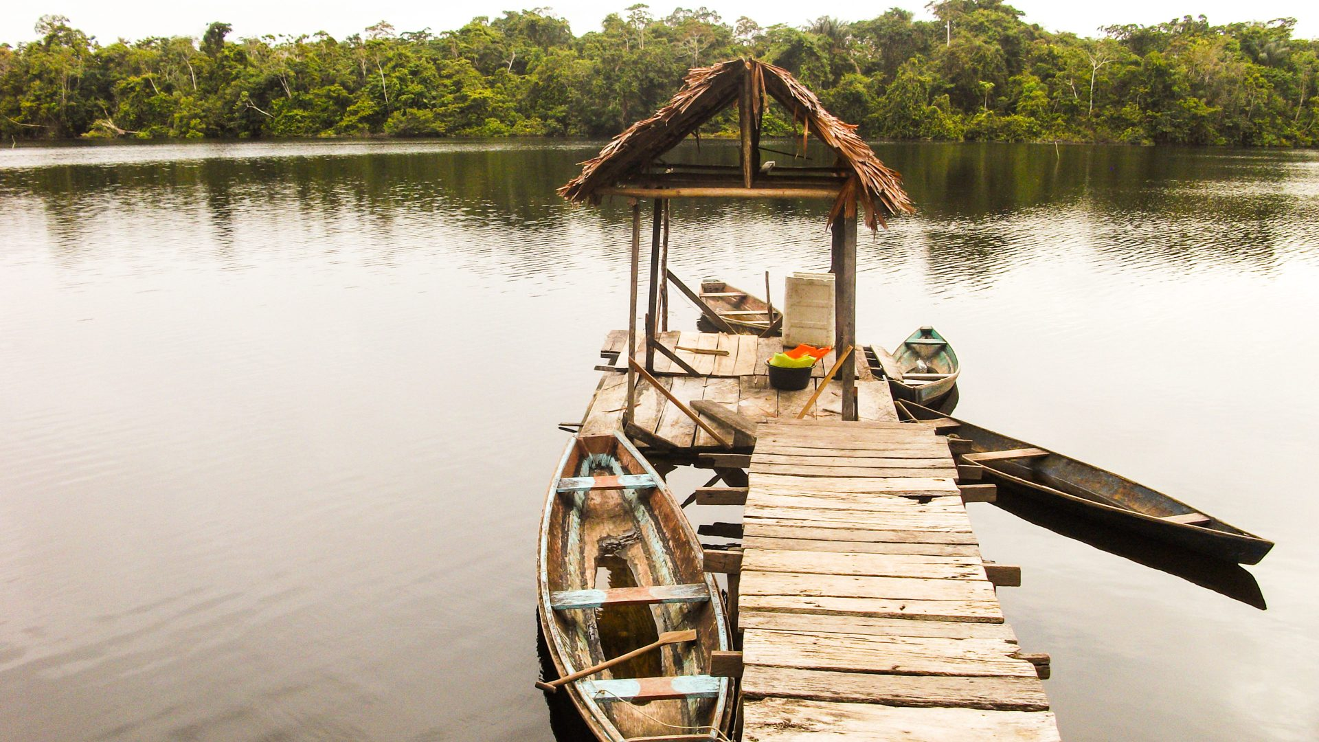 A wooden pier leads out to small wooden canoes in the Amazon jungle.