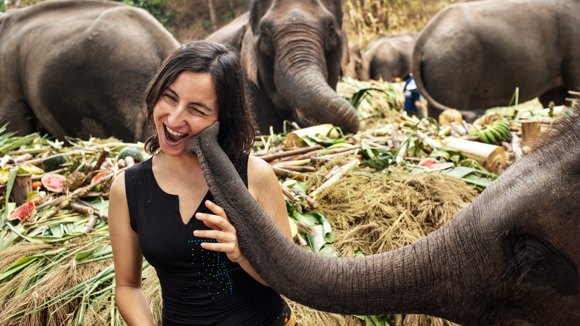 Elephant trekking alternatives: elephant-feeding experiences