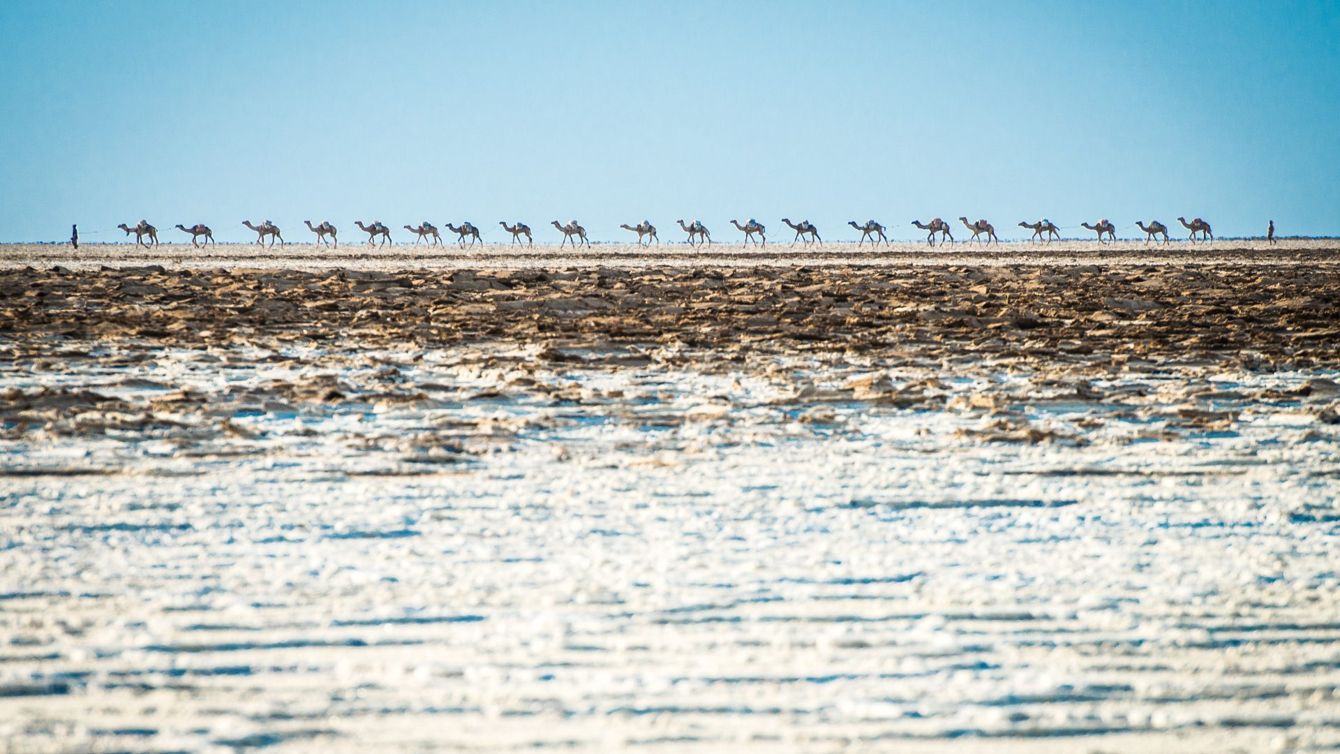 Camel handlers walk their camels across the salt plains of the Danakil Depression in Ethiopia.