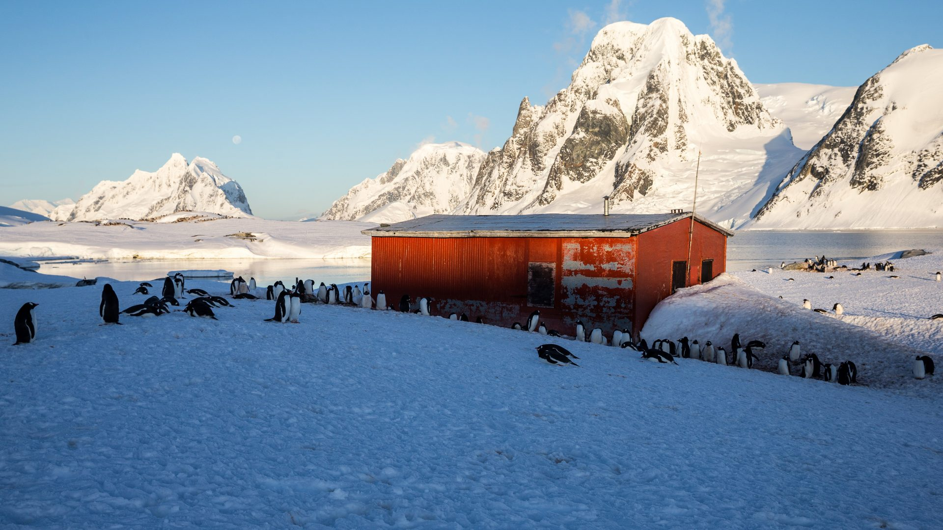 A red building can be seen surrounded by penguins on Petermann Island.
