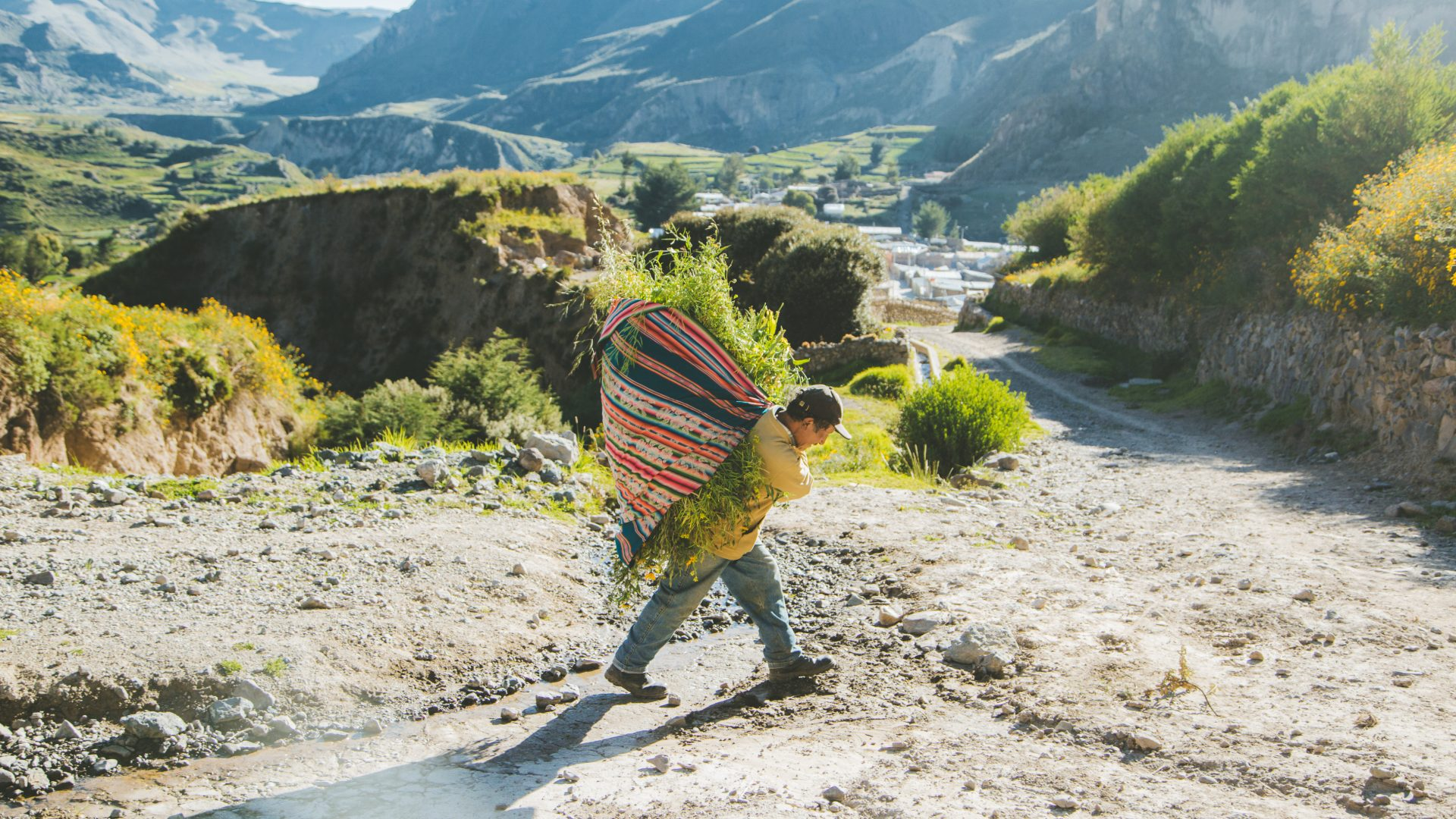 A local carries grasses in a colorful basket on their back in the Colca Canyon in Peru