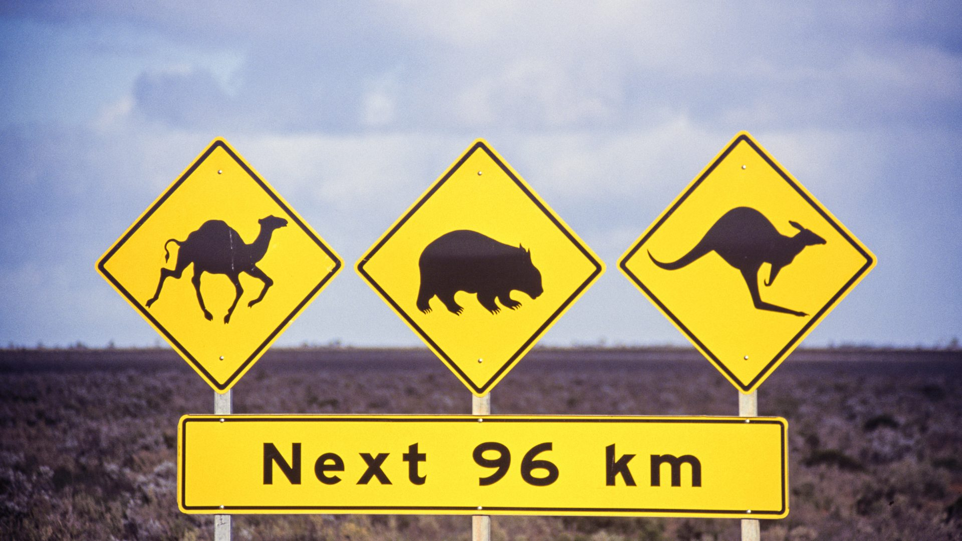A sign in outback Australia tells drivers to be on the look-out for camels, wombats and kangaroos.
