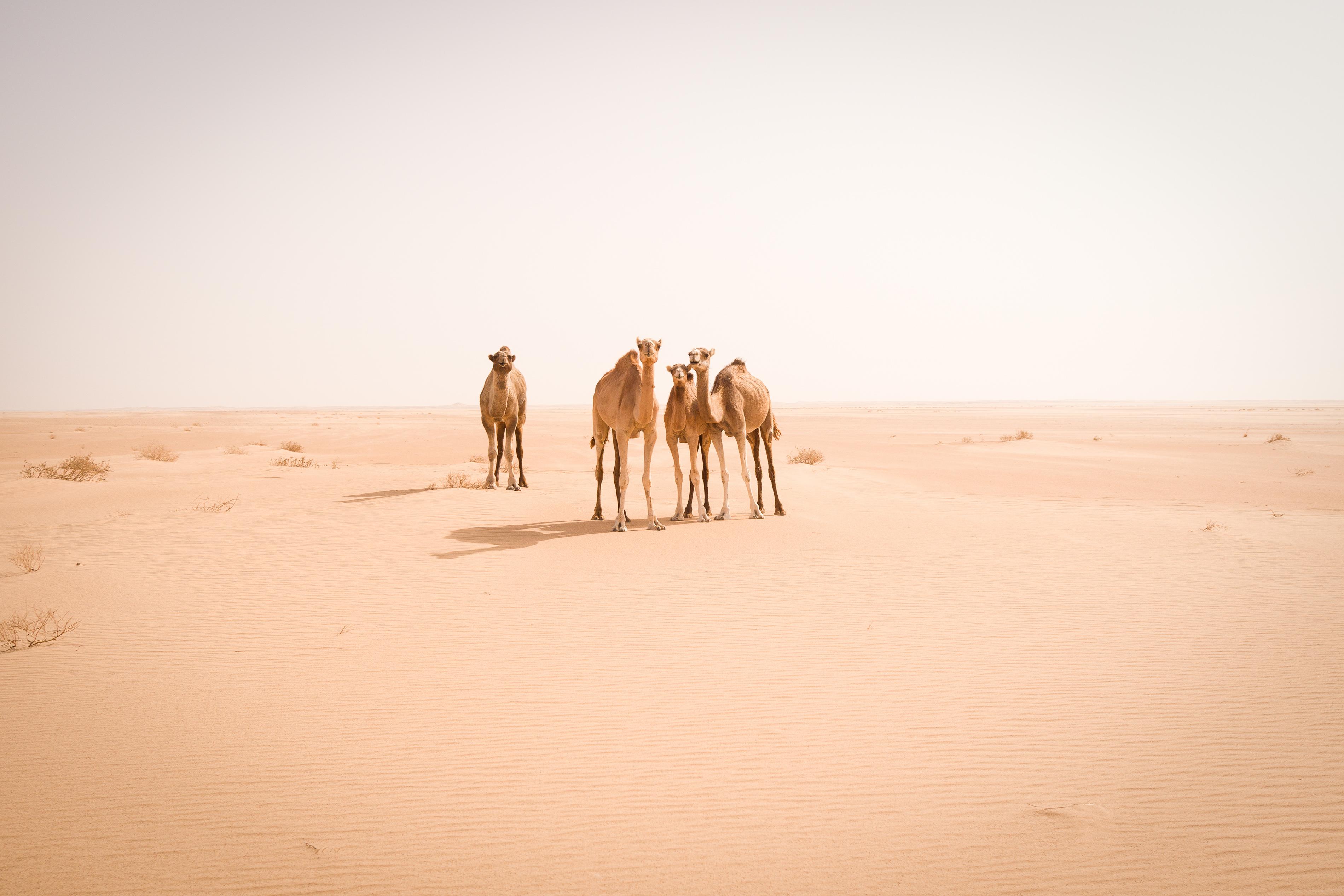 This photographer hopped freight trains through the Sahara