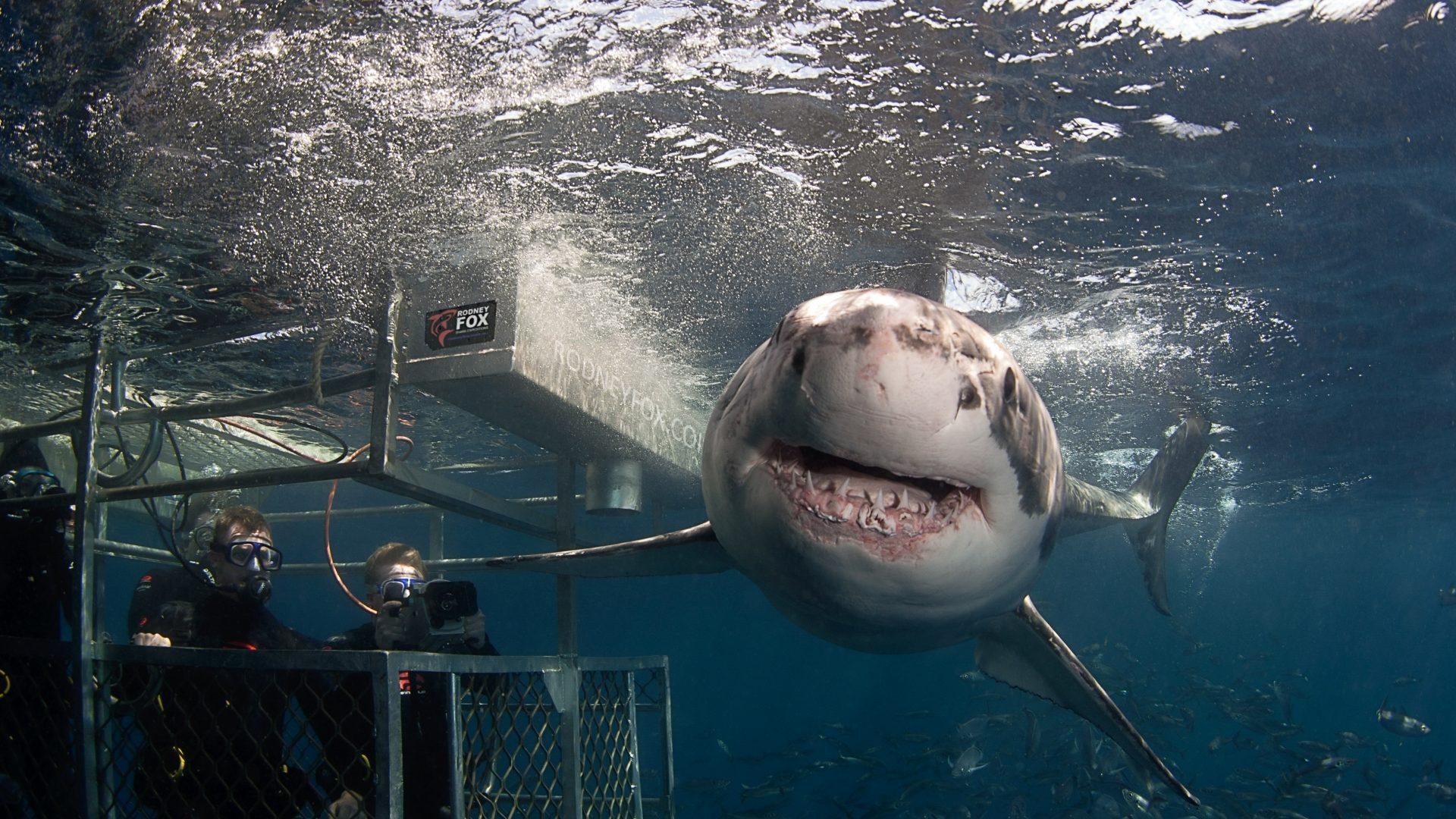 A shark swims by the shark tank during a Rodney Fox cage diving expedition.