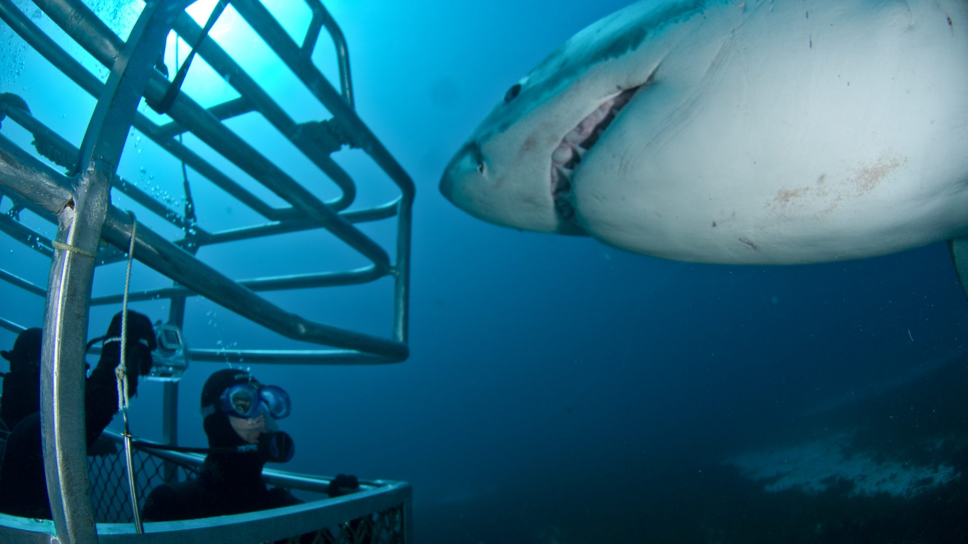 Ocean floor shark cage diving with Rodney Fox Expeditions, Australia.