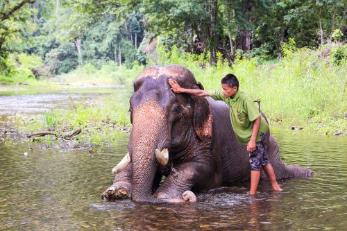 Mahout young boy and elephant in the forest