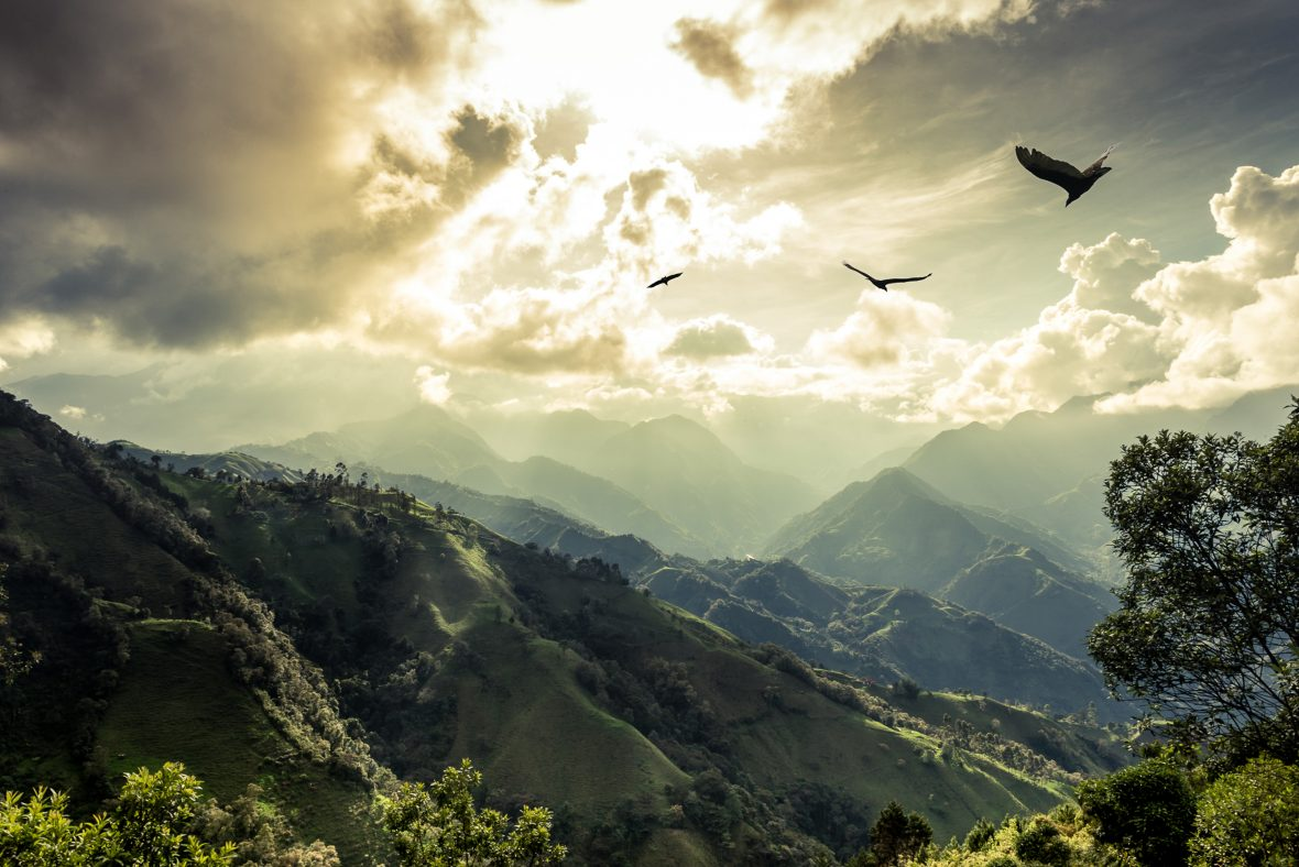 Birds soar above the verdant valleys in the Amazon.