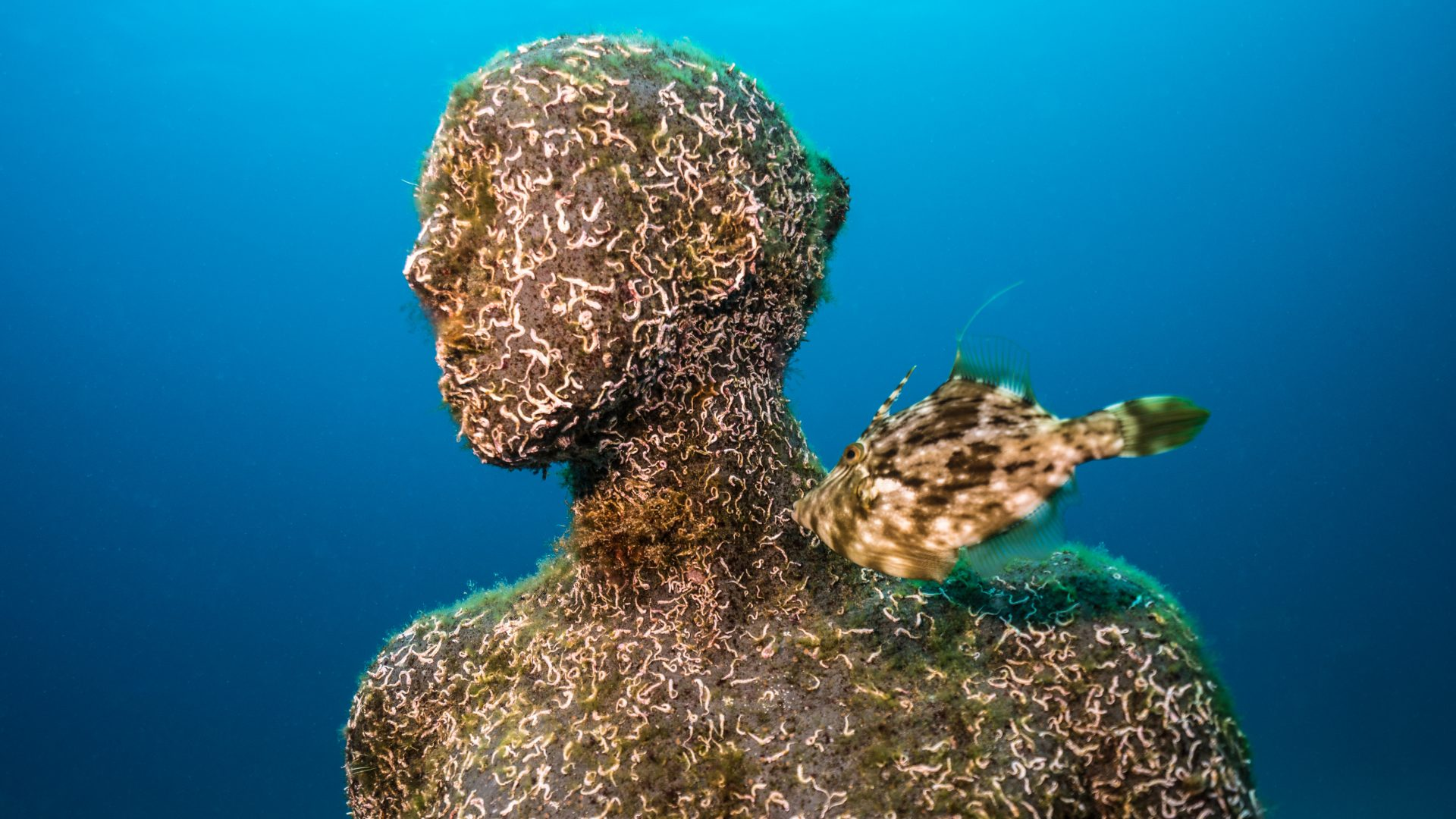 A fish swims up to one of Jason deCaire Taylor's underwater sculptures that form part of the 'Life at Museo Atlantico' exhibition.