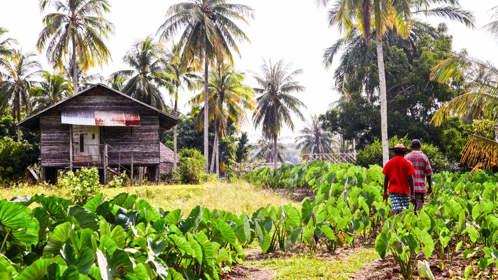 Walking through one of the verdant villages which border Lake Murray in PNG.