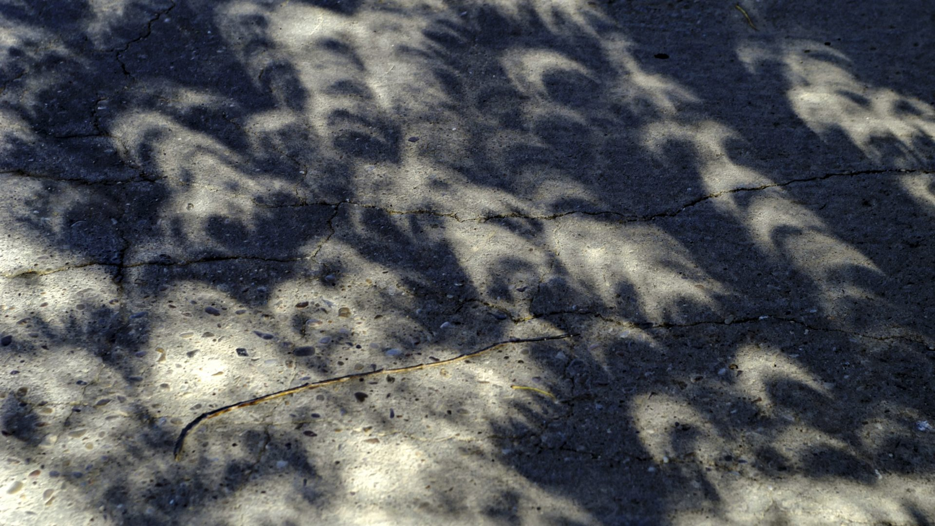 Images of the eclipsed crescent sun appear in a tree shadow.