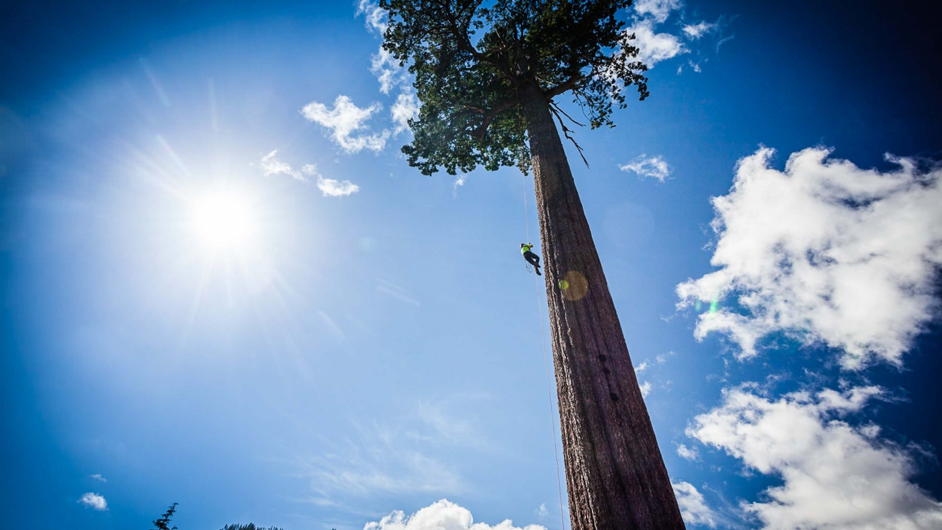 Big Lonely Doug is a tree with iconic status. In the middle of a clear cut, one logger chose to save the Douglas Fir, Canada's second largest.