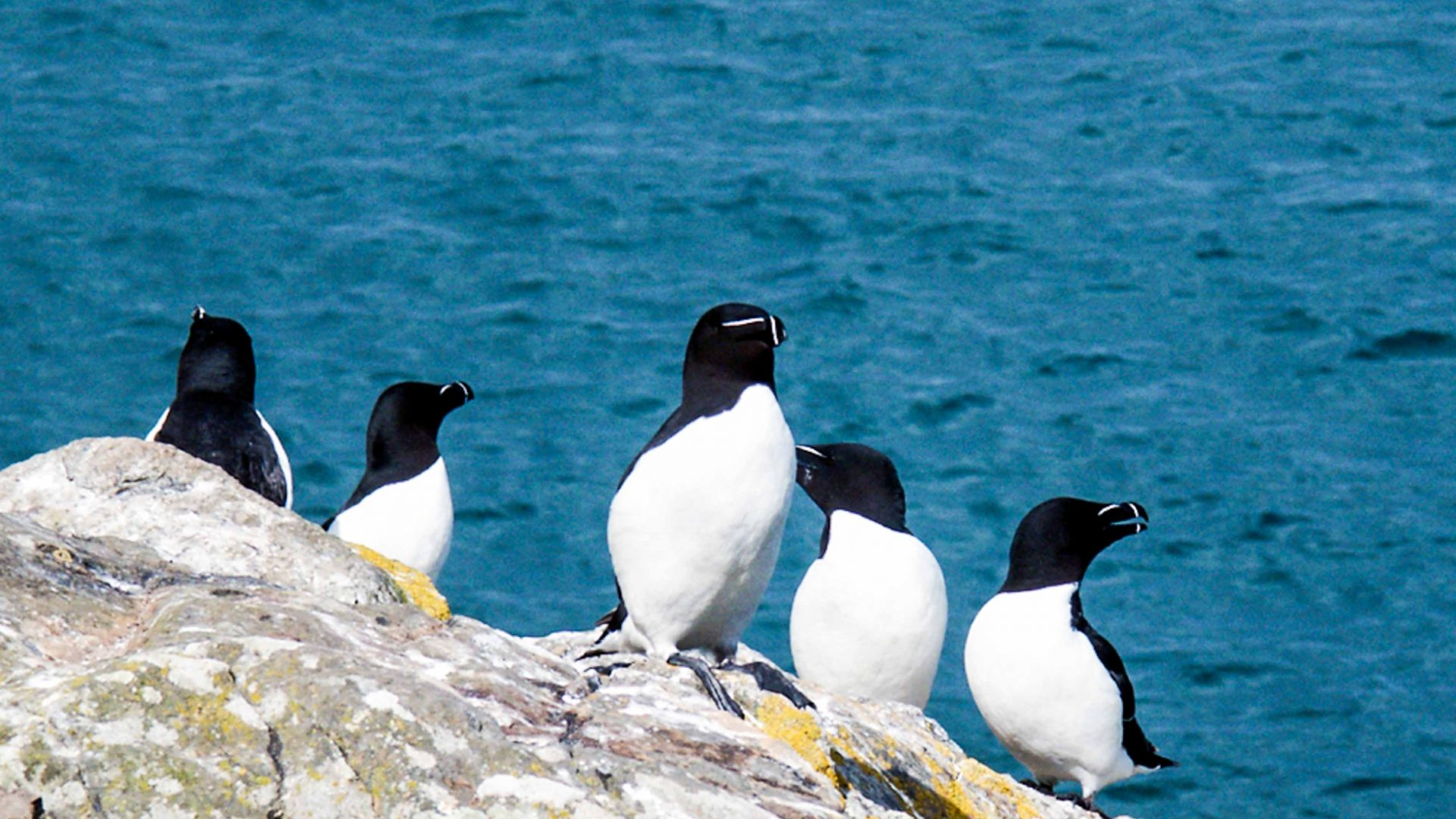 Penguins are one of the many wildlife you'll likely come across on this coasteering adventure.