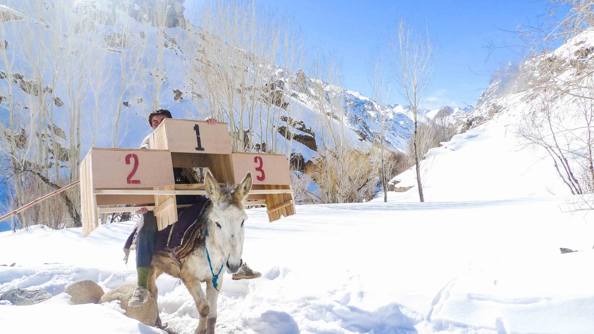 A donkey carries the winners' podium to the starting line of the Afghan Ski Challenge.