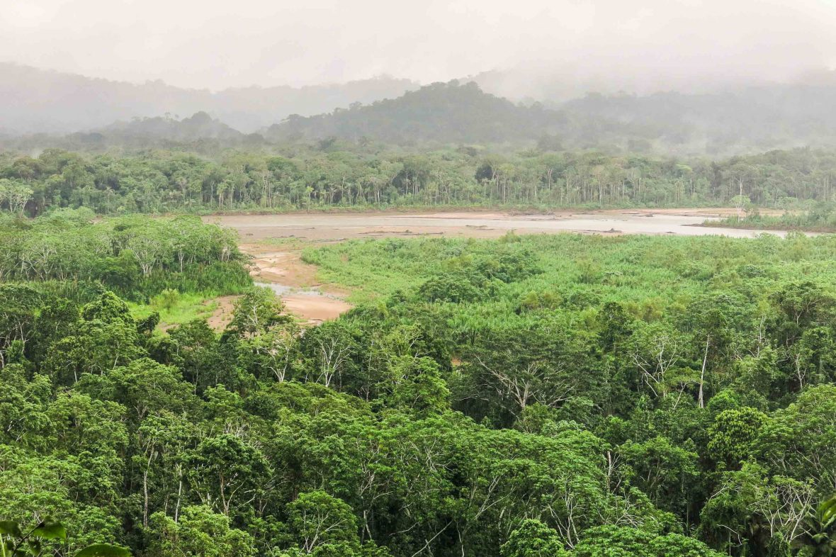 Jungle of Madidi National Park, Bolivia.