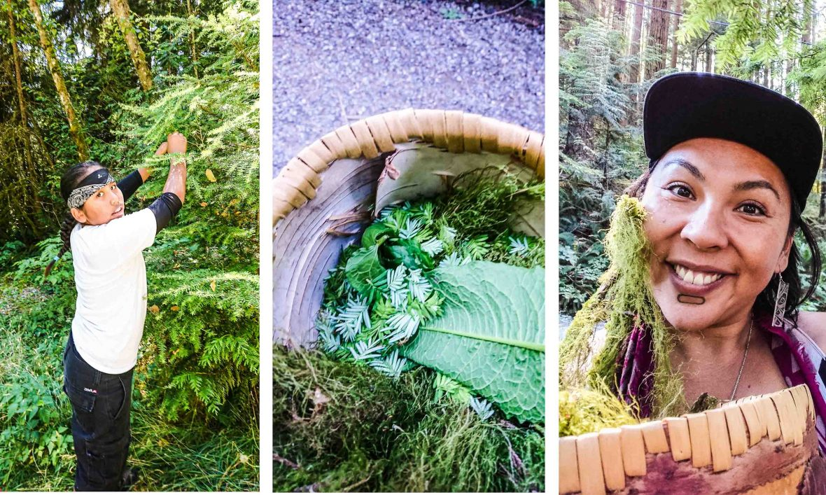 Canada First Nations cuisine: Western Hemlock tips and other leaves from the forest are collected for the meals.