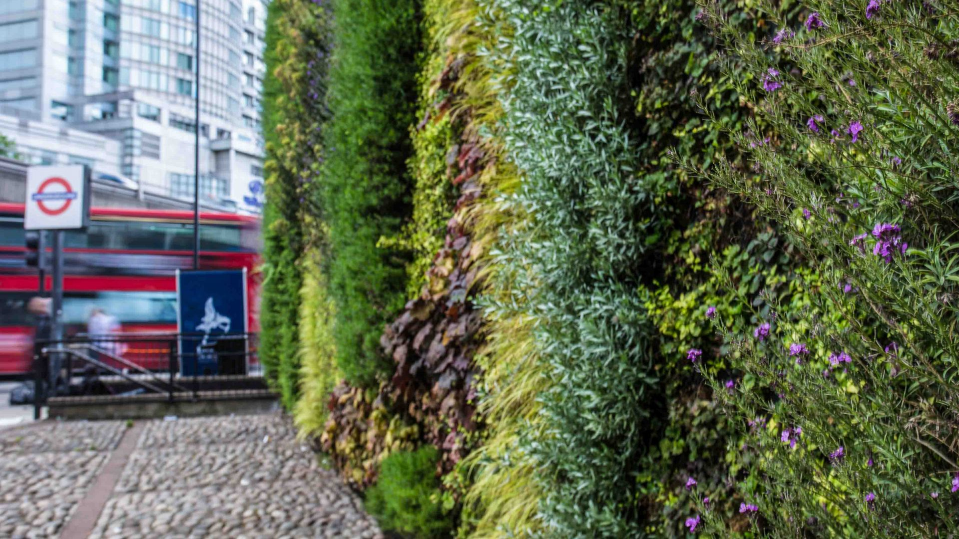 London National Park City: A vertical garden at Edgeware Road in London.