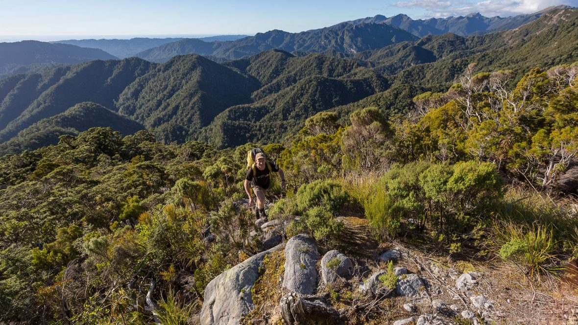 Hiking the Paparoa Track on New Zealand's west coast.