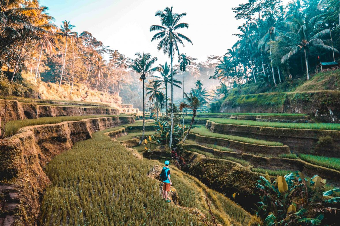 A traveler takes in the terraced rice fields of Tegallang, Indonesia.