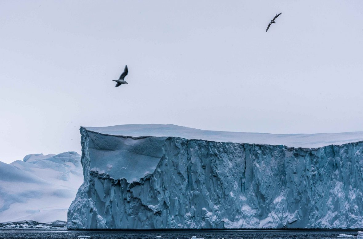 Seagulls flying overhead a massive iceberg shelf.