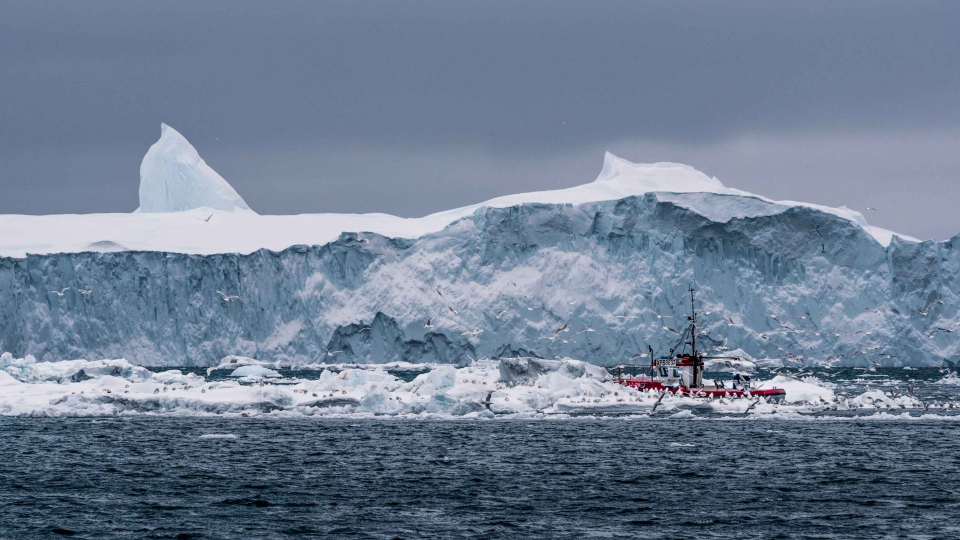In the shadow of an iceberg as tall as a skyscraper, a fishing trawler in Disko bay pulls in its catch while sea birds circle overhead.