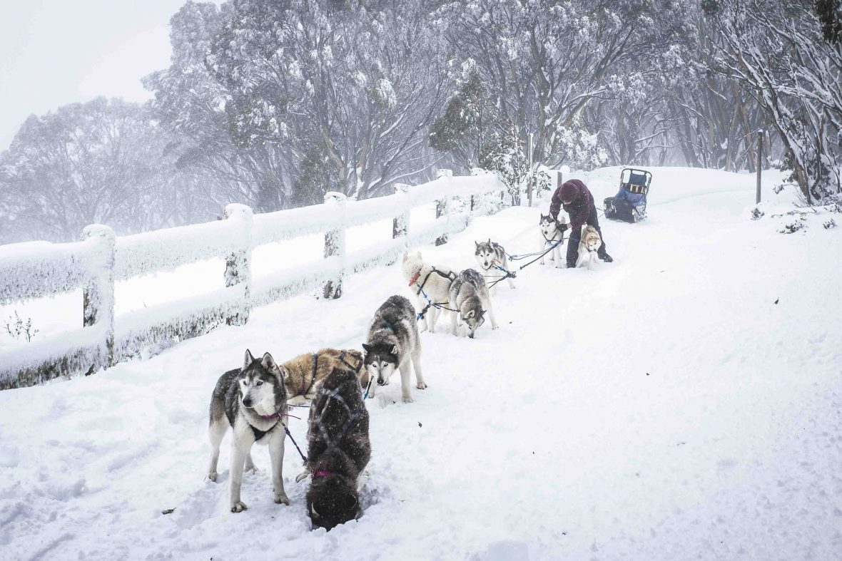 The Howling Huskys team take a breather on Mount Baw Baw, Australia.