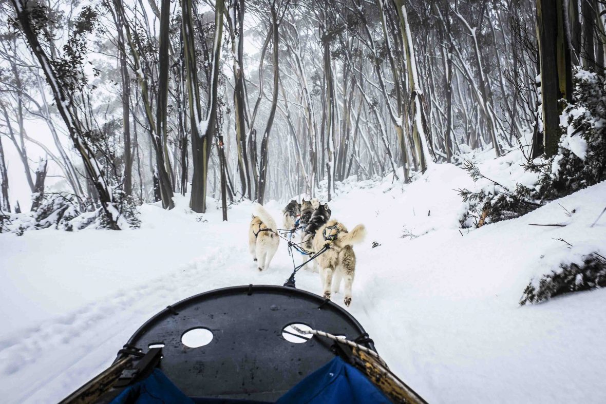 The Howling Huskys team pull the sled along a trail on Mount Baw Baw, Australia.
