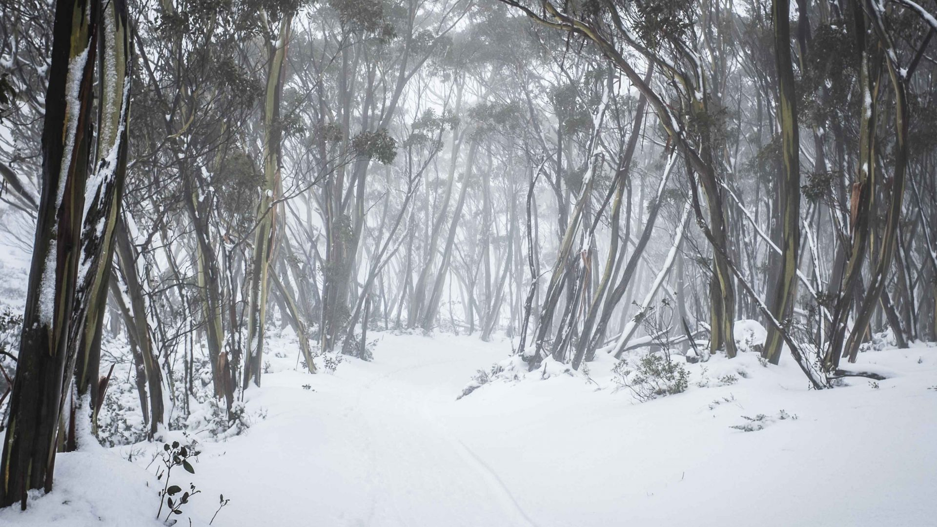 The snow-covered surrounds of Mount Baw Baw, Victoria, Australia.