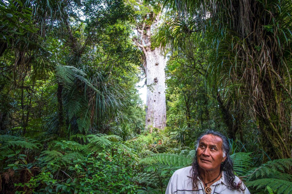 Adventures 2018: A Maori guide treks through the Waipoua Forest, home to Tana Mahuta, the largest living tree in New Zealand.