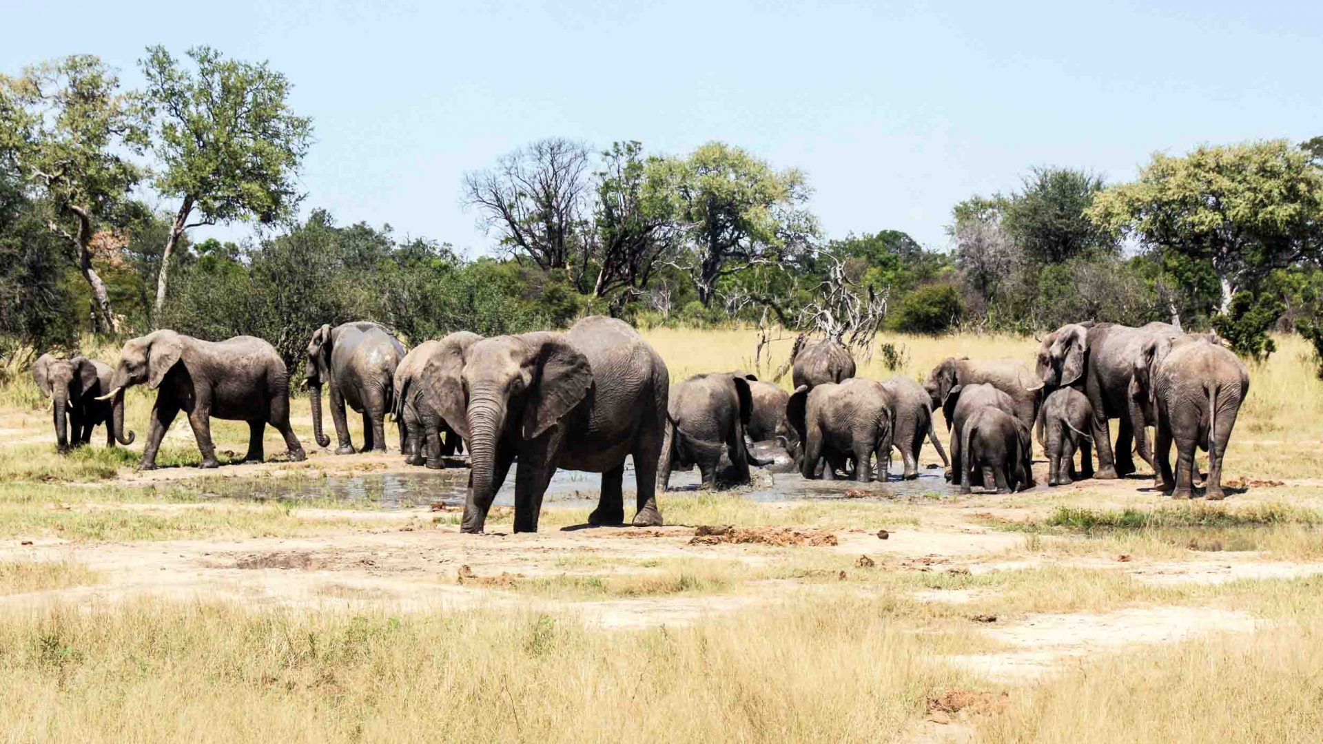With Mugabe gone, is 2018 the year for Zimbabwe's tourism revival?