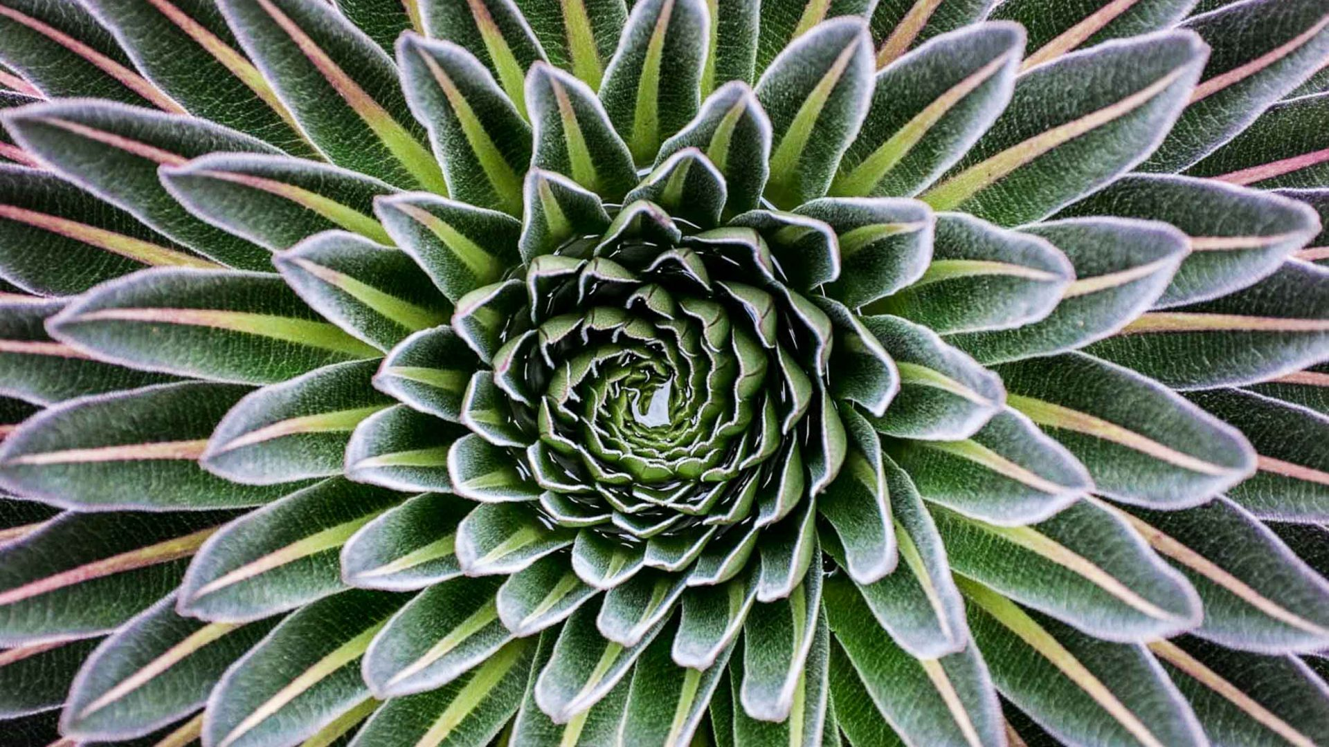 A plant's symmetry catches the eye during the hike of the Rwenzori Mountains in Uganda.