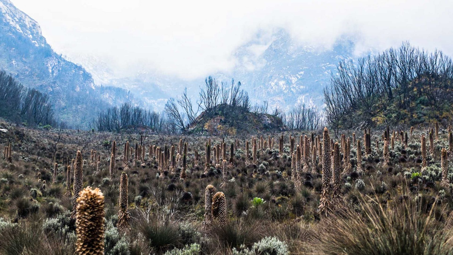 The variable but spectacular landscape of the Rwenzori Mountains in Uganda.