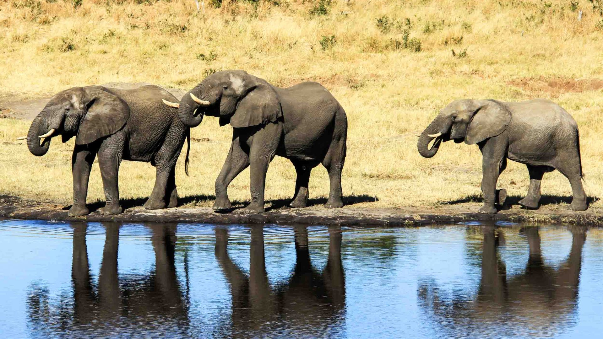 Elephants at a pool in Zimbabwe's Hwange National Park.