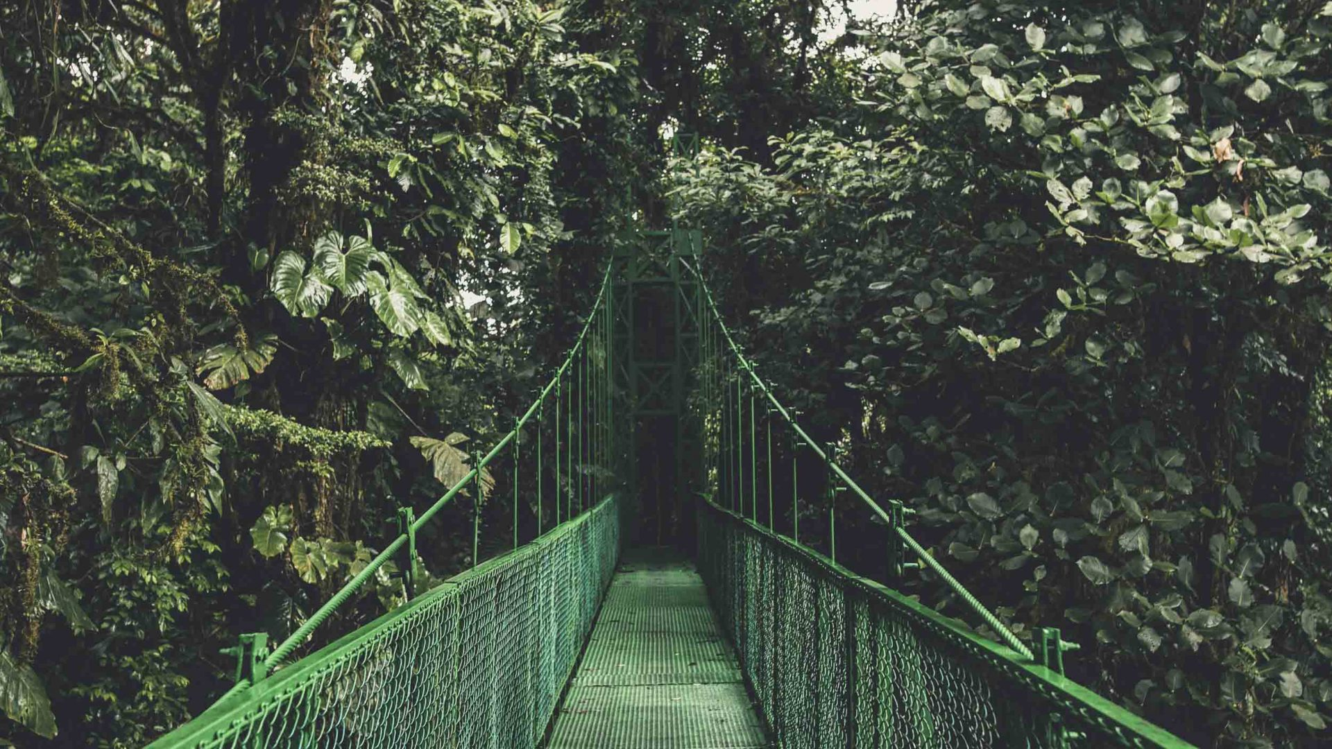 A bridge surrounded by lush green forest in Costa Rica's Monteverde region.