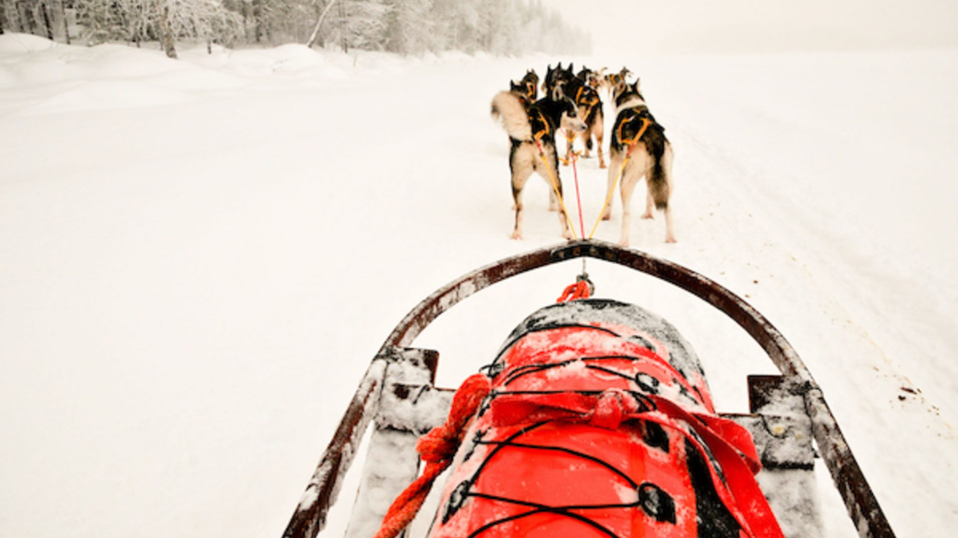 Dogs pull a sled through Arctic snow.