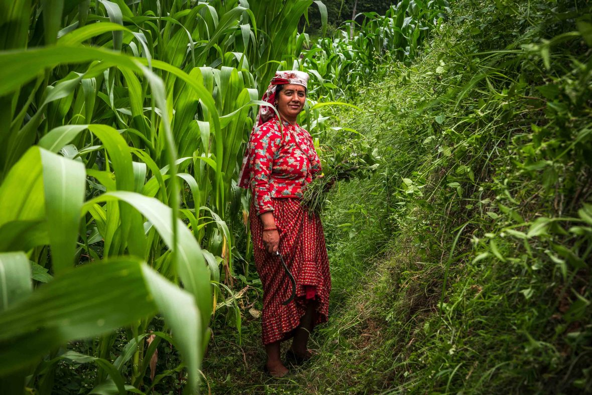A proud Nepalese farmer standing among verdant green foliage.