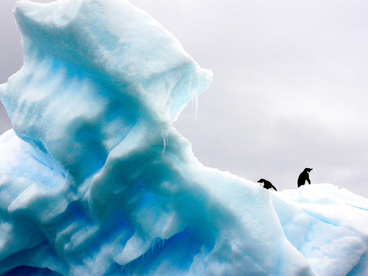 Penguins stand atop an iceberg in Antarctica.