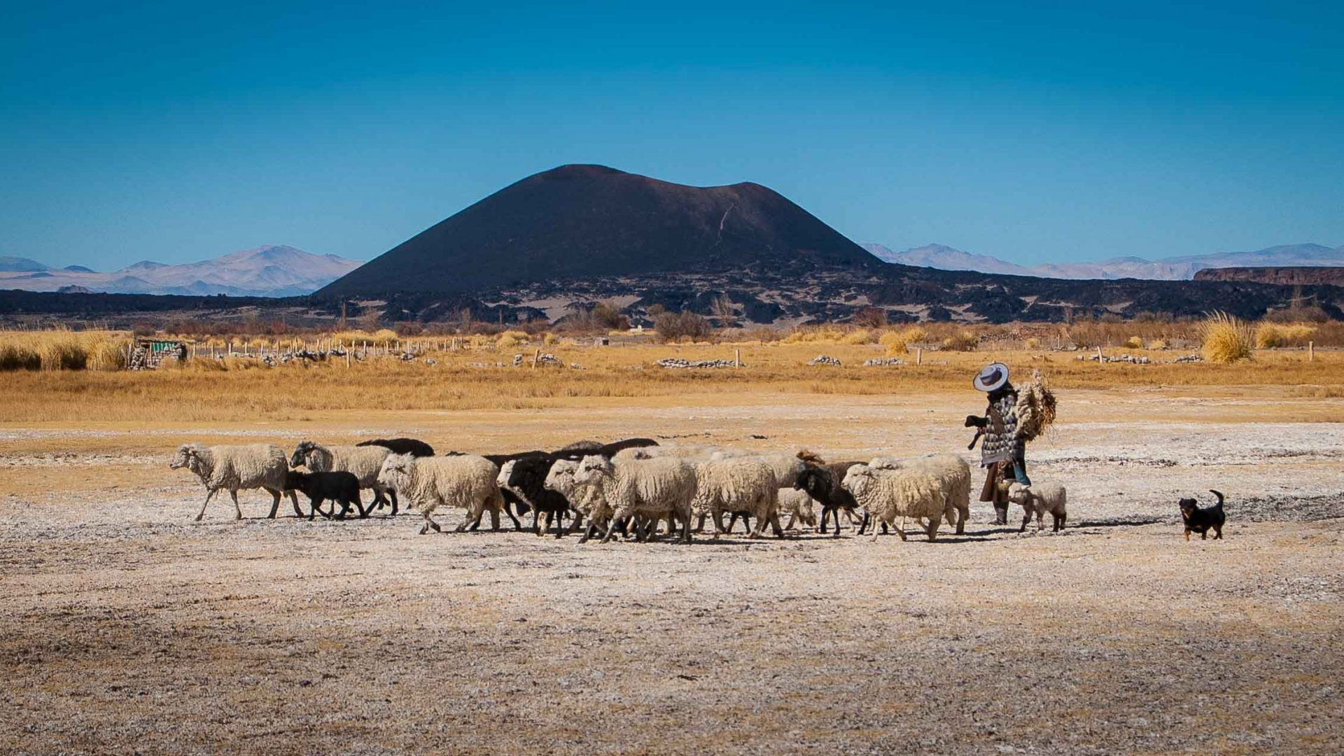 A woman herds her sheep across the barren landscape in Salta, Argentina.