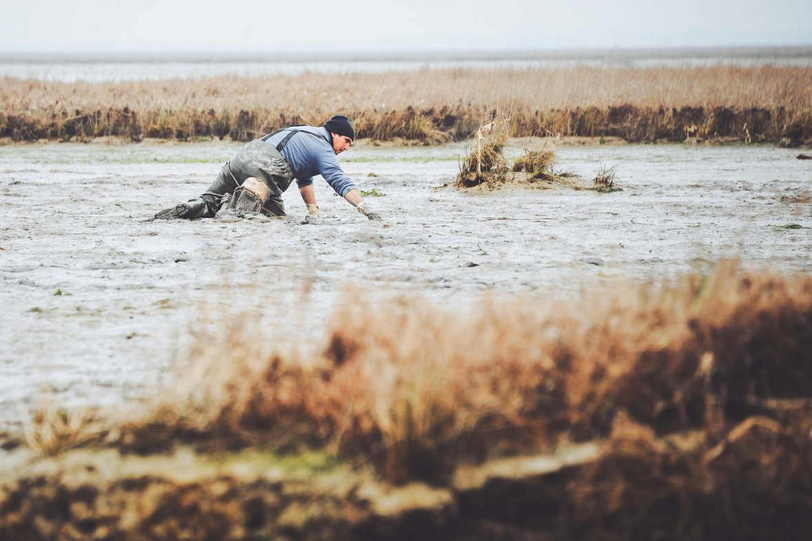 Locals dig for clams while knee-deep in mud in the lagoon surrounding Venice, Italy.