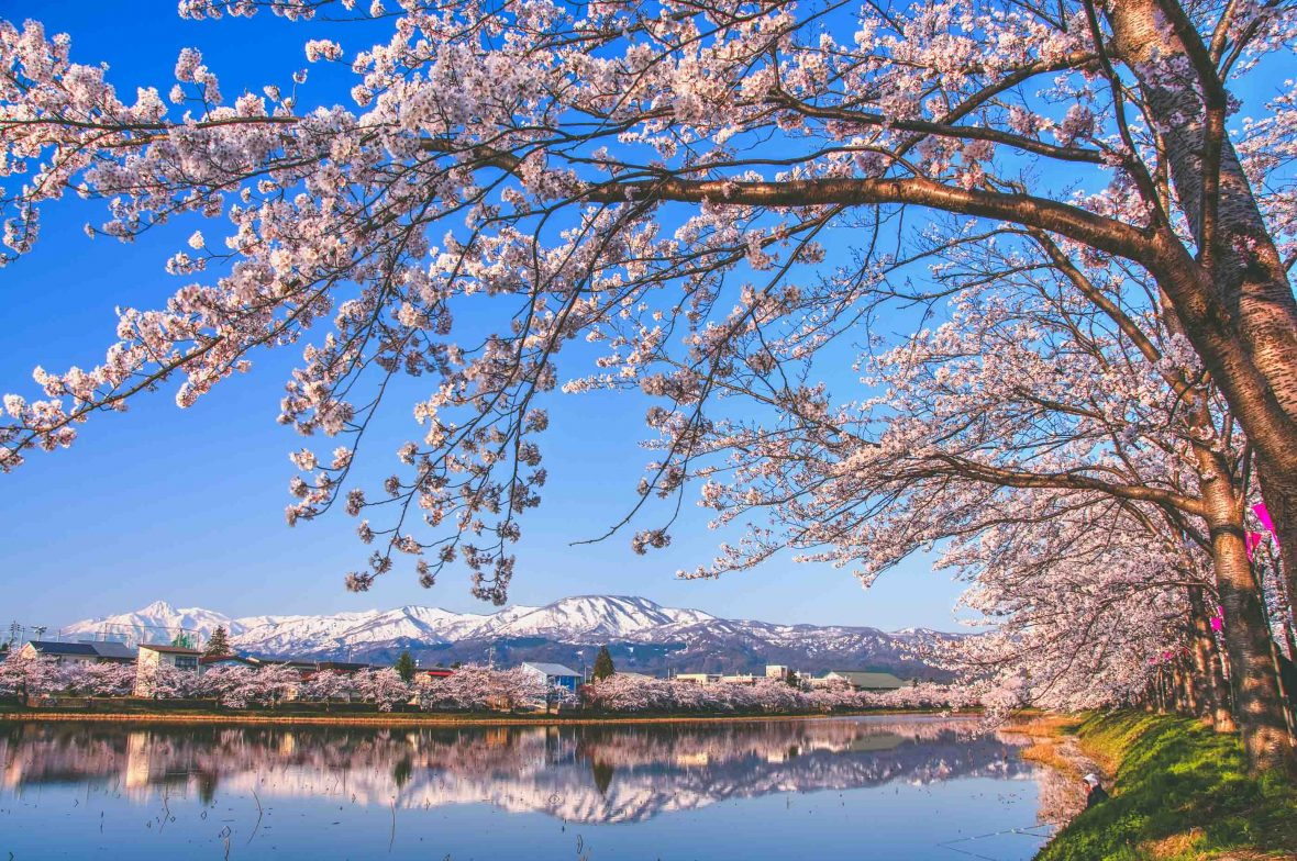 Cherry blossoms frame the Myoko mountain range in Niigata, Japan.