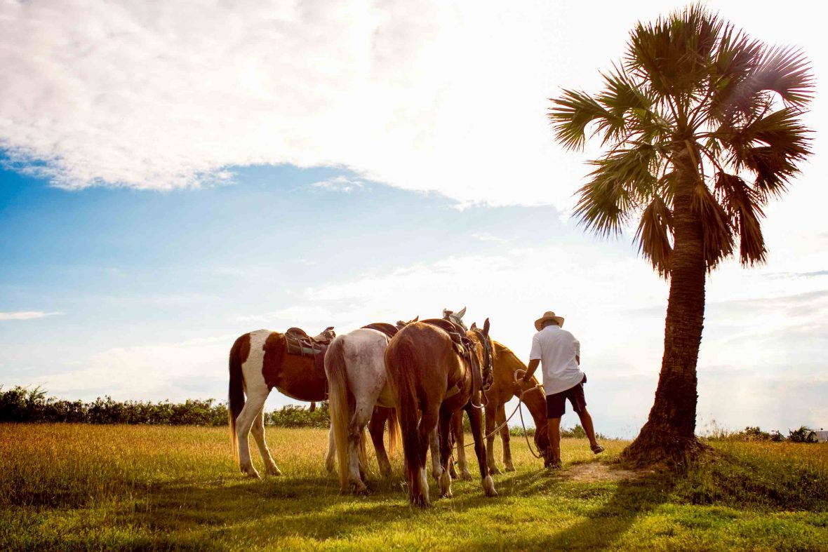 A cowboy prepares his horses for riding in Cuba.