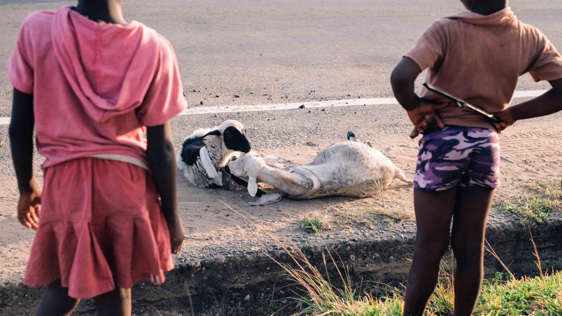 Kids view a pair of goats left by the roadside in Beyin, Ghana's Western Region.