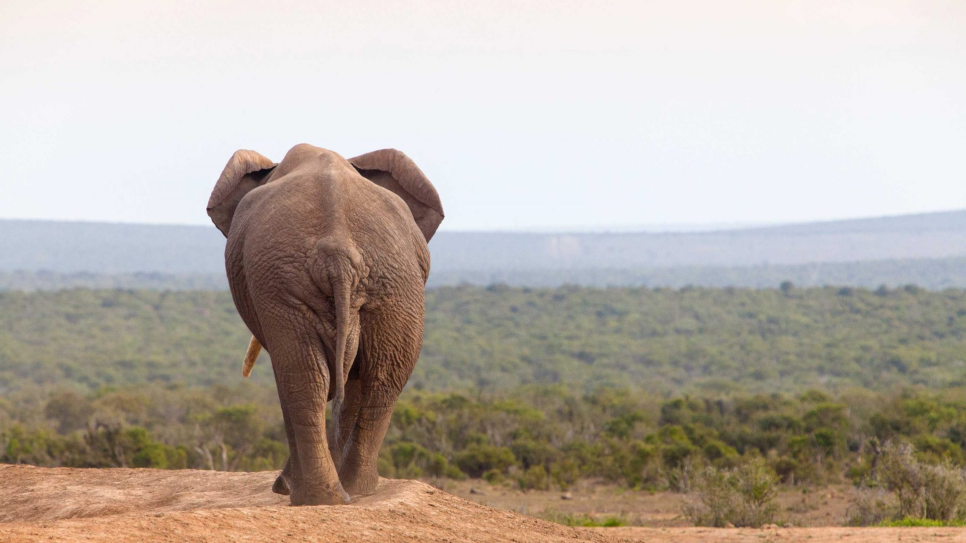 Encounters of the turd kind: Dispatches from a South African walking safari