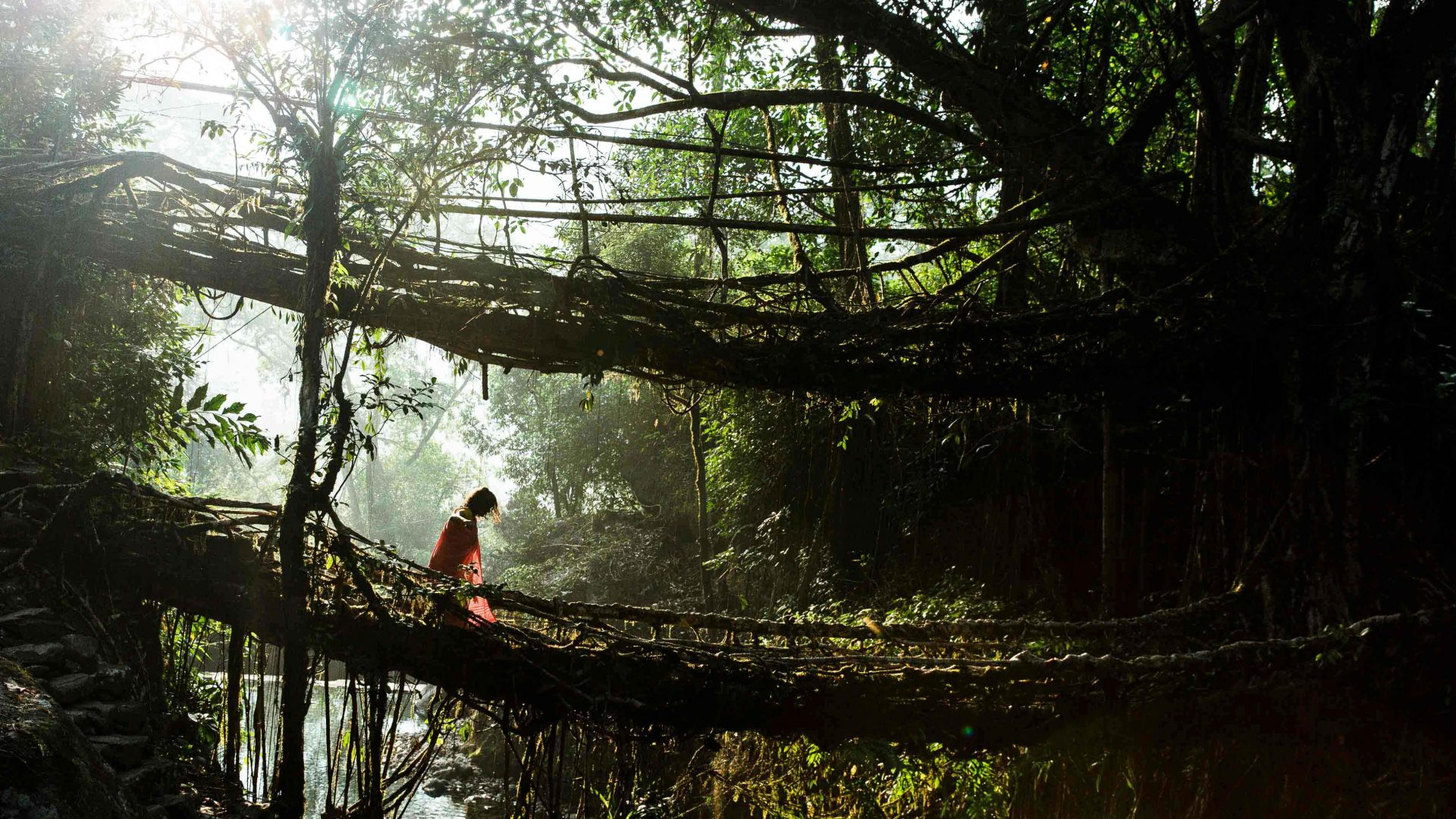 Nongriat's double-decker root bridge at sunrise in the East Khasi Hills, Meghalaya, India.