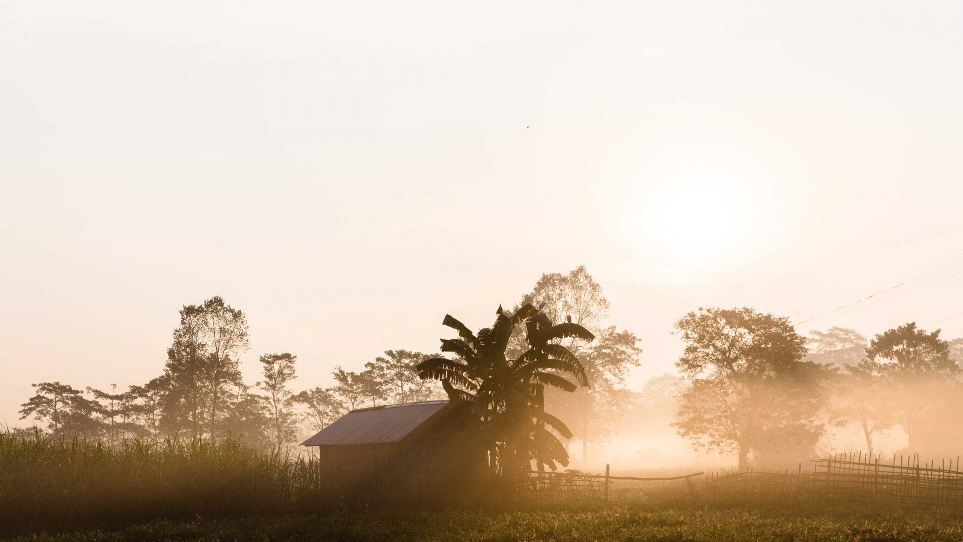 Sunrise over the fields in Majuli Island, Assam, India.