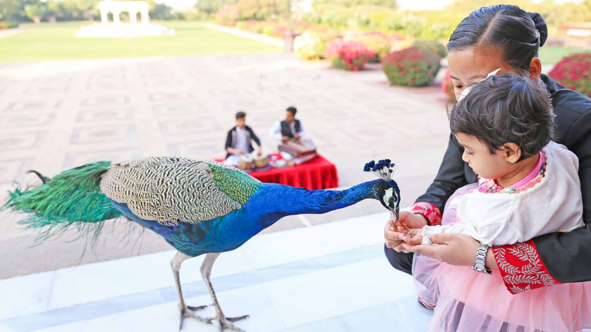 Baby Gia Sereni enjoys feeding a peacock in Jodhpur, Rajasthan, India.