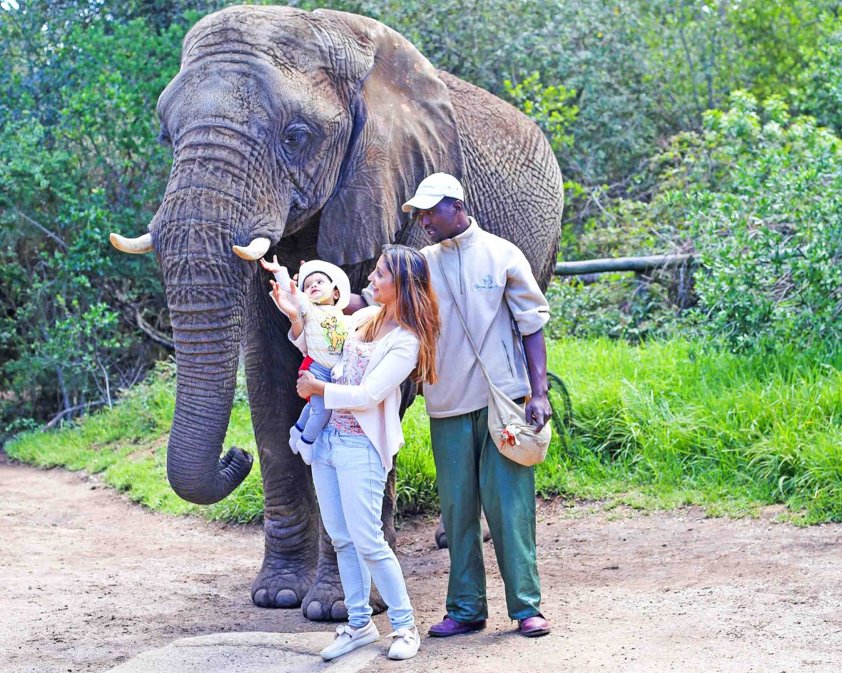 Baby Gia Sereni with her mother, travel writer Anashi Shah, interacting with an elephant in South Africa.