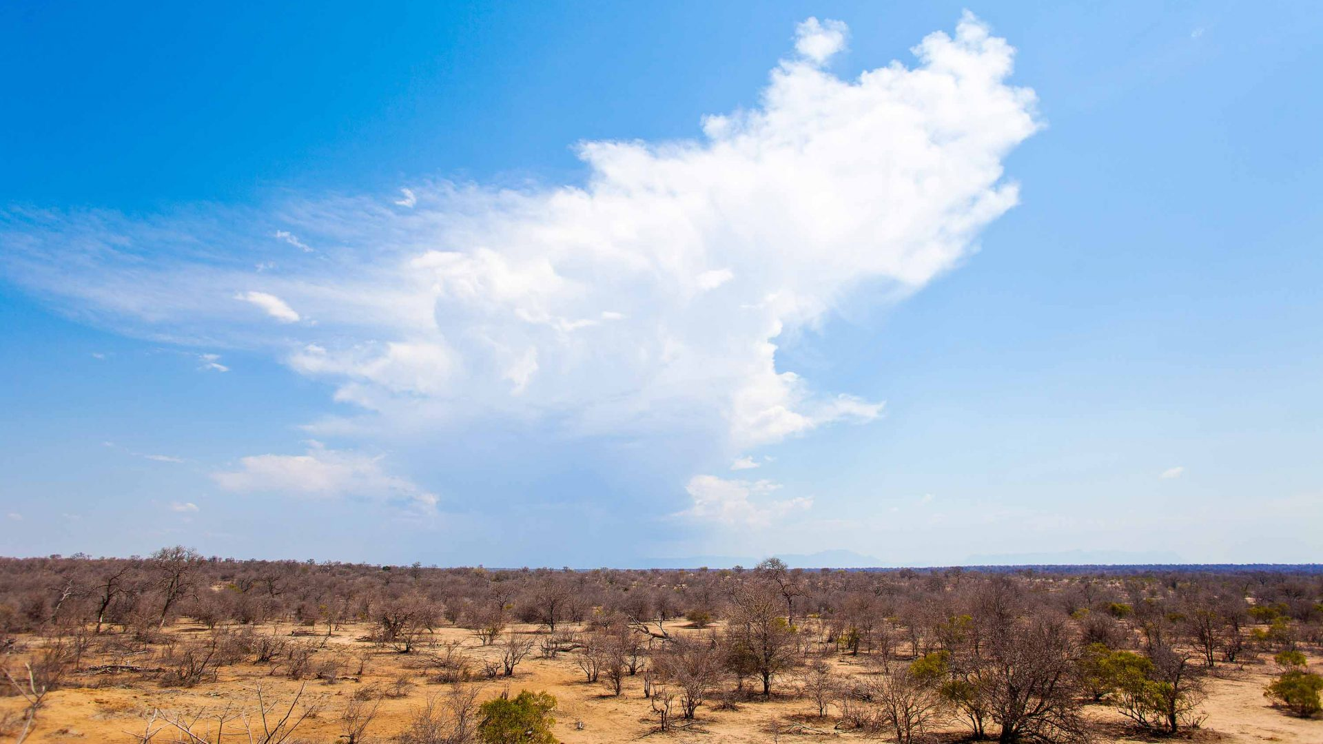 A cloud over Great Kruger Lowveld in Balule Nature Reserve in South Africa.